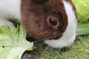 A rabbit 300x200 - www.domesticforest.com